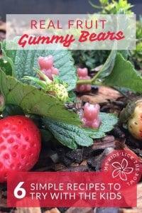 healthy homemade real fruit gummy bears