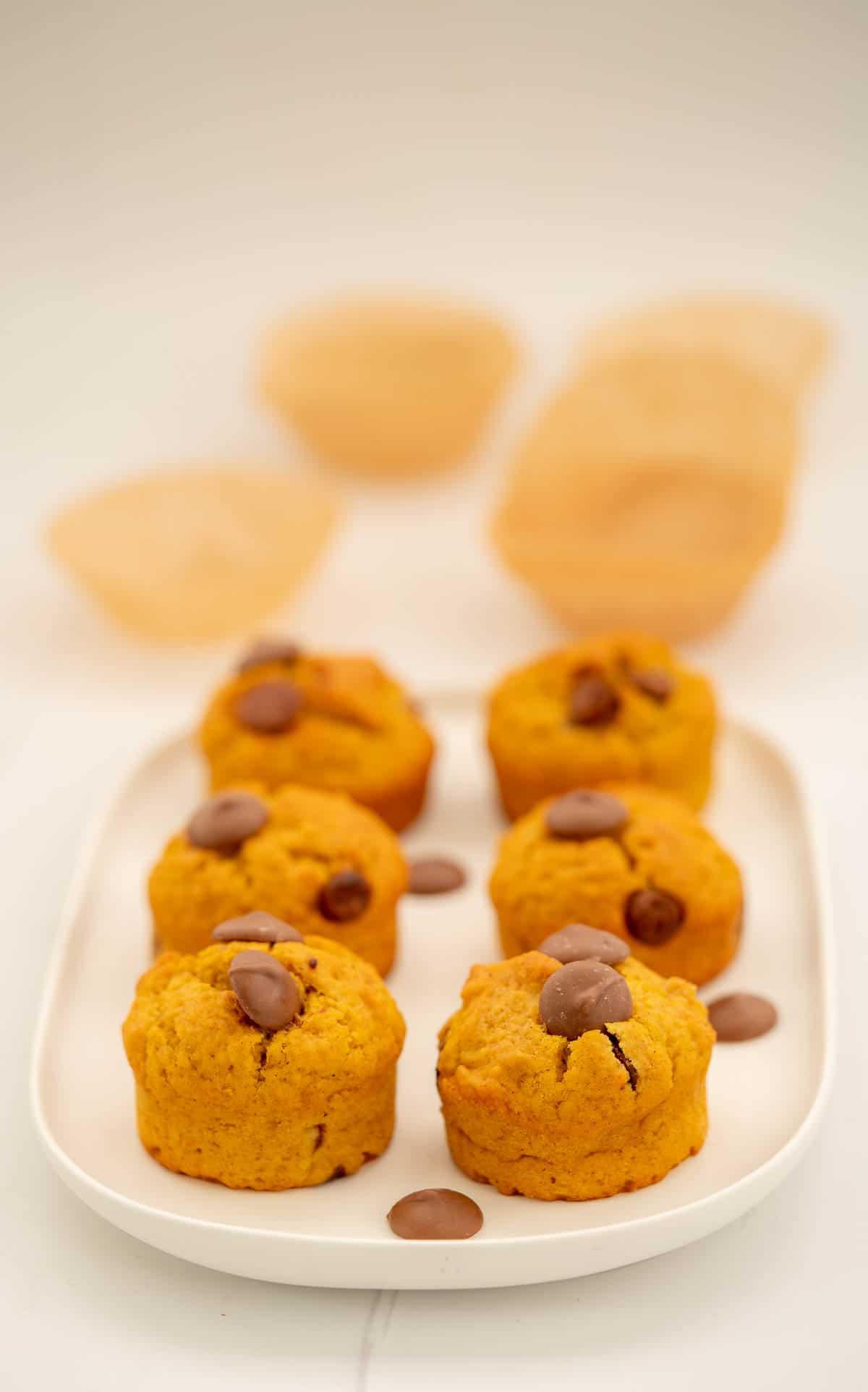 6 pumpkin chocolate chip muffins on a white rectangular serving plate.